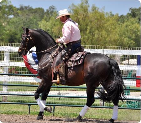 Eitan Beth Halachmy - Cowboy Dressage