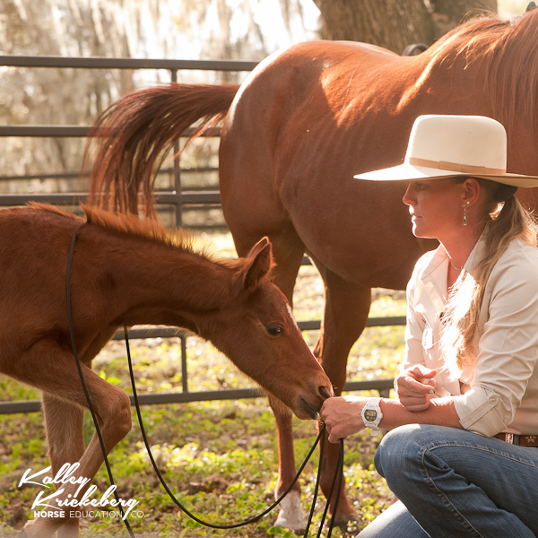 Kalley Krickeberg - The Educated Foal