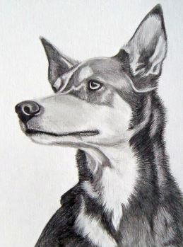 Tracey Sirbello Pet Portraits